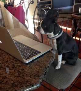 My blog helper Ellie
